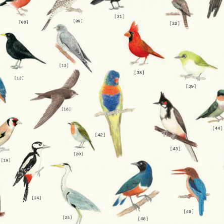 Feathered Friends - Blog Image