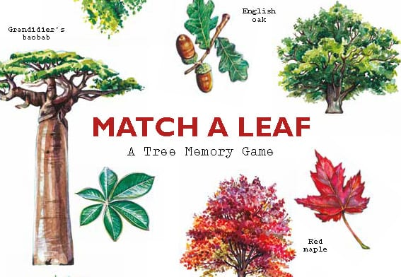 Match a Leaf - Product Thumbnail