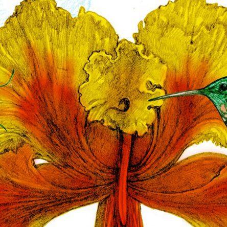 Jonathan Drori's Top 6 Plants - Blog Image