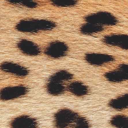 Animal Magic - Blog Image