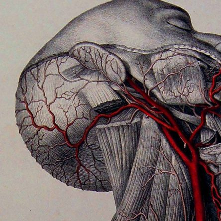 The Morbid Anatomy Story - Blog Image